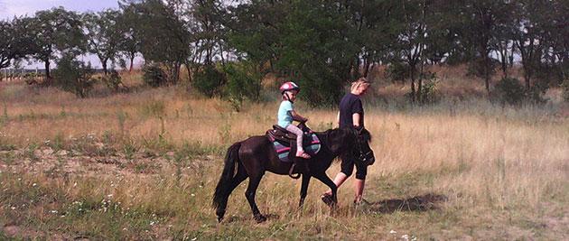 pronájem-jezdeckých-koní-2
