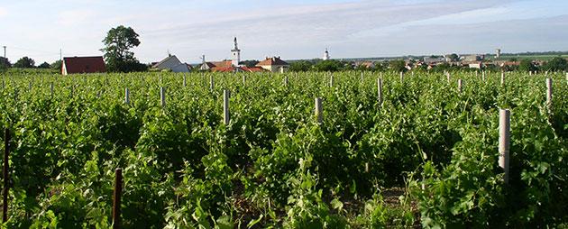 vinařství-(1)